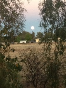 The Harvest Moon going down.